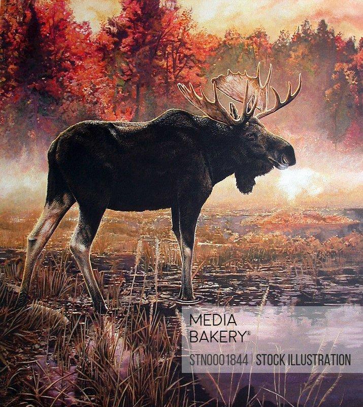 Elk in swamp