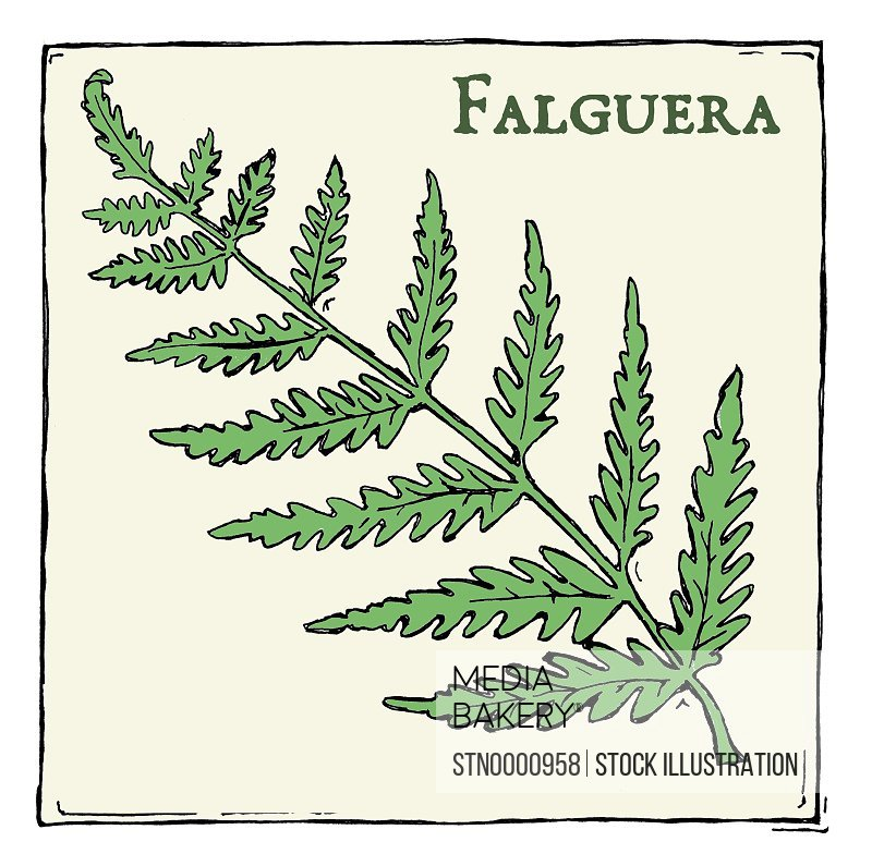 Fern (Falguera), green plant with leafs