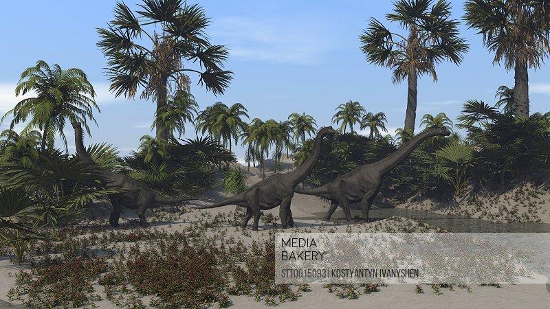 Three Brachiosaurus dinosaurs grazing on vegetation.