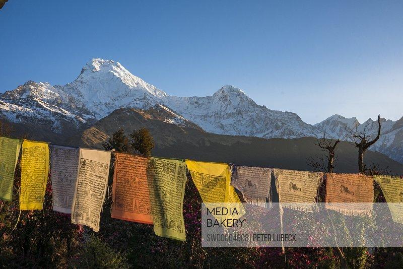 Tibetan prayer flags against snowcapped mountains