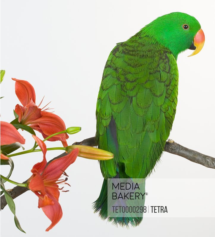 Green bird perched with flowers