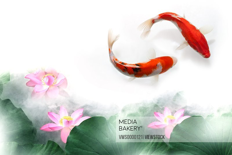 Digital composite of gold fish and lotus