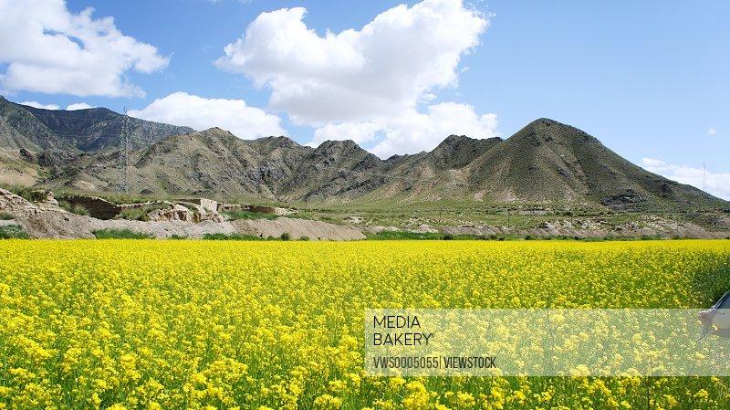 The Qinghai Tibet Plateau