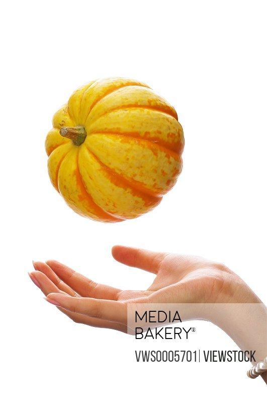 Hand holding vegetable
