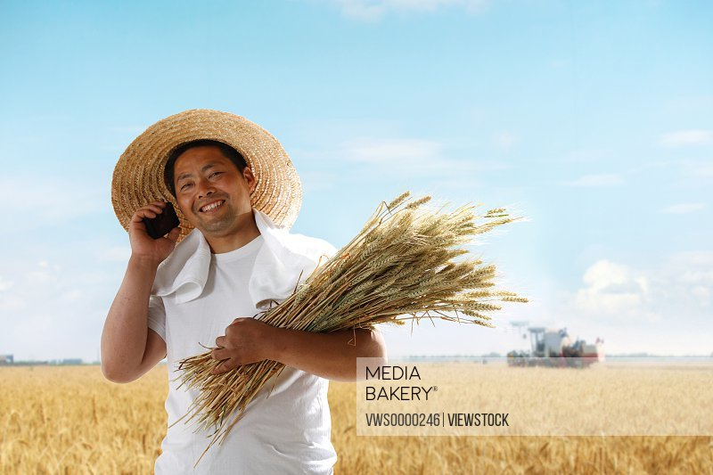 Farmer holding wheat and making phone call