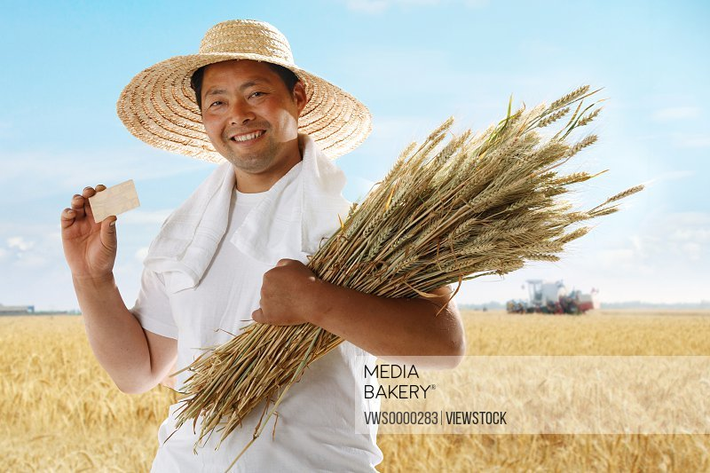 Farmer holding card and wheat in field