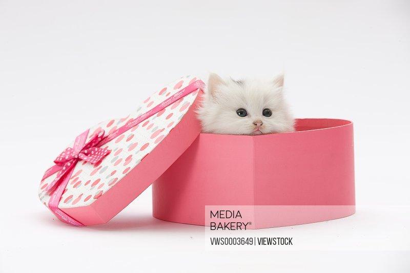 A cat in box