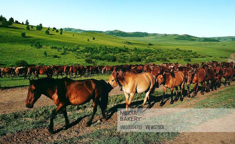 Horse in grassland