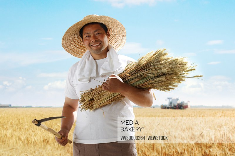 Farmer holding wheat in field