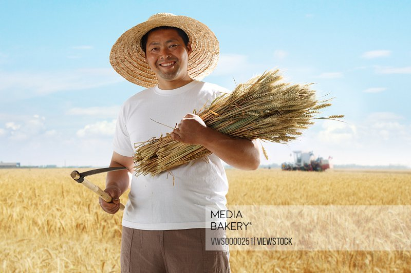 Farmer holding wheat in wheat field
