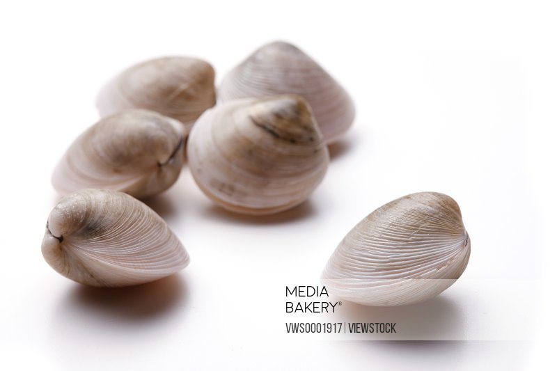 Close-up of clam