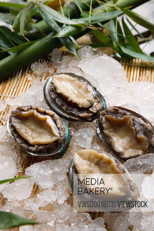Close-up of abalone