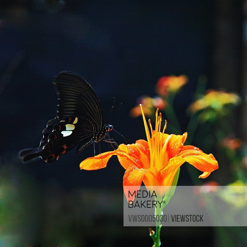 The butterfly and flowers