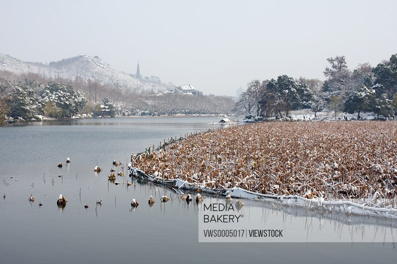 Snow scenic in West Lake