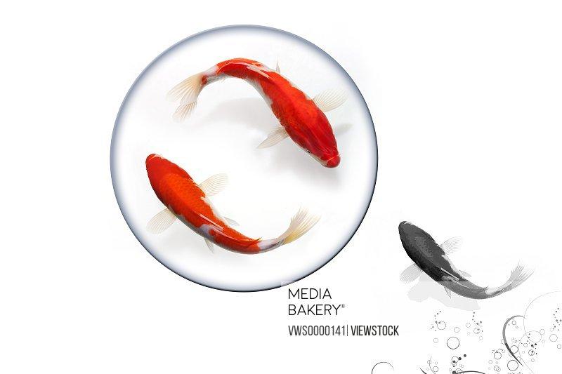 Digital composite of gold fish