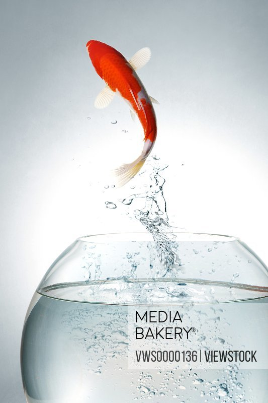 Digital composite of gold fish and tank