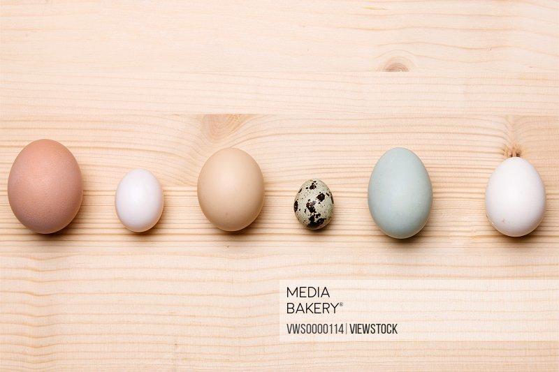 A row of eggs
