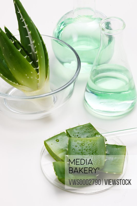 Experiment with Aloe