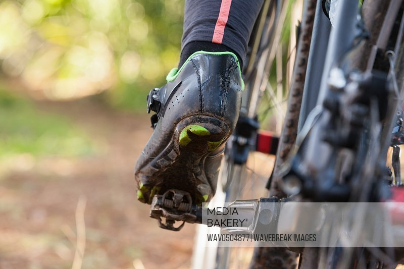 Low section of mountain biker riding bicycle in forest