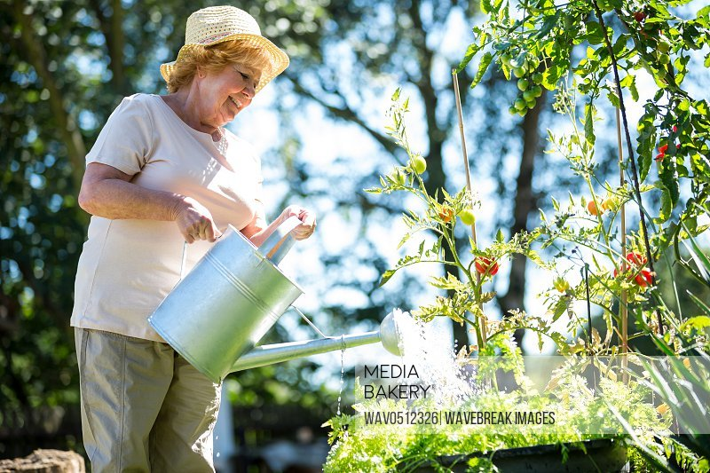 Senior woman watering plants with watering can in garden on a sunny day