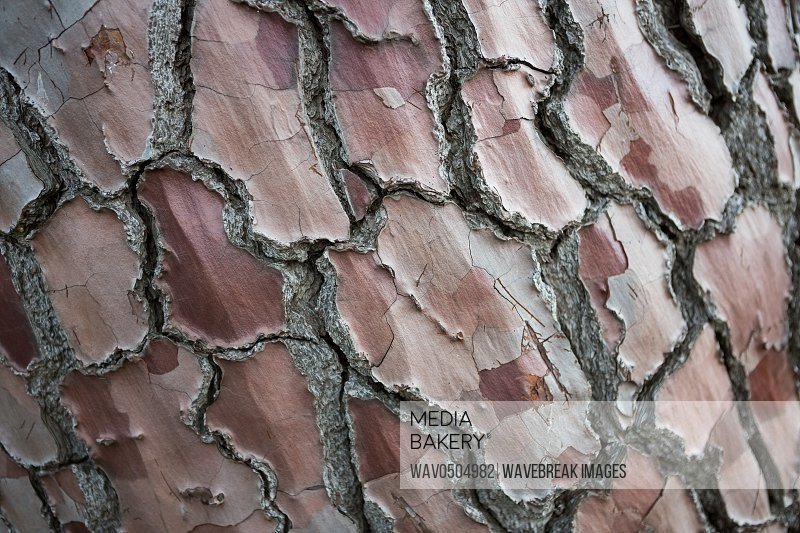 Close-up of tree bark in the forest