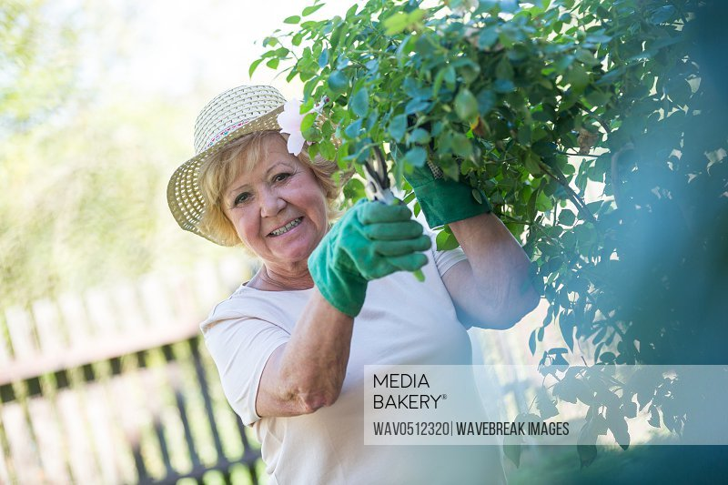 Senior woman trimming plants with pruning shears in garden