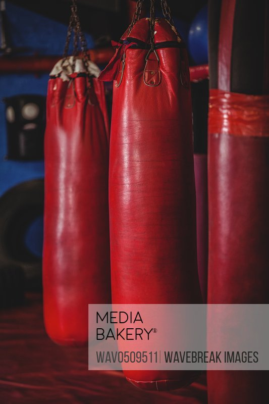 Punching bags hanging in fitness studio