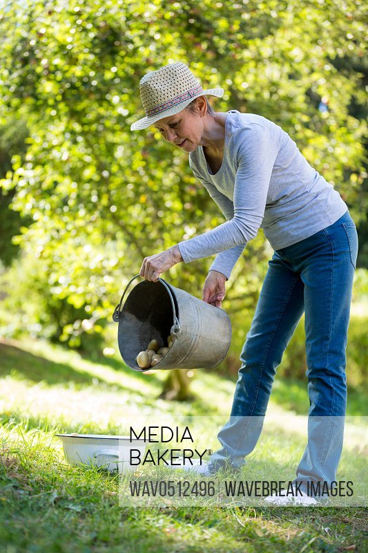 Senior woman putting potatoes in bowl from bucket in garden on a sunny day