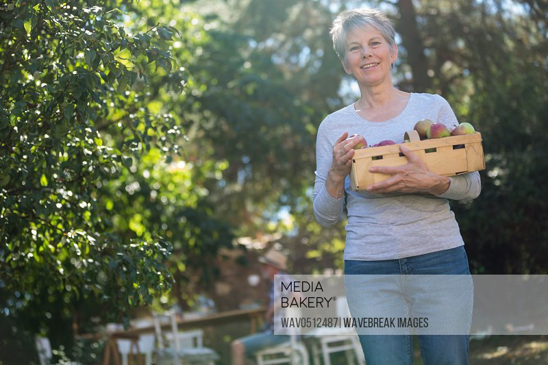 Portrait of senior woman holding box of fresh apples in garden on a sunny day