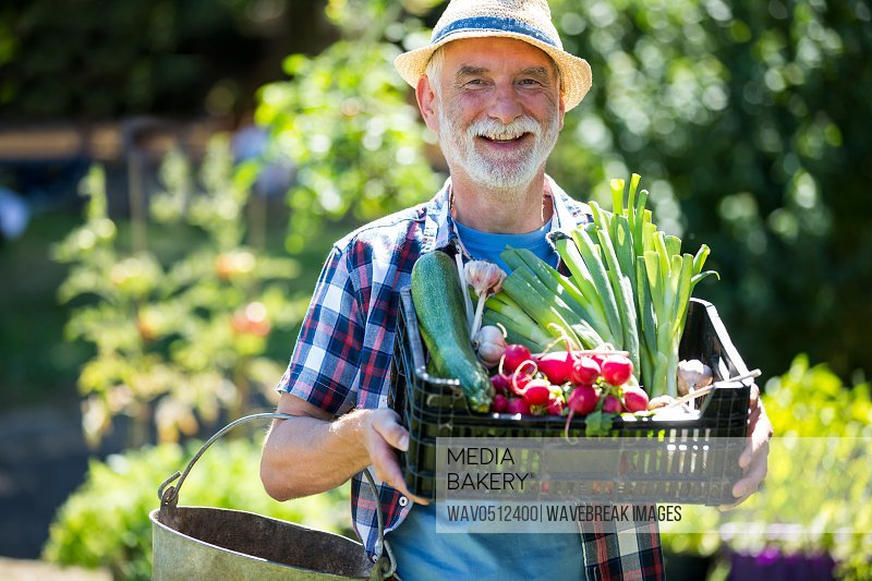 Portrait of senior man holding crate of fresh vegetables in garden on a sunny day