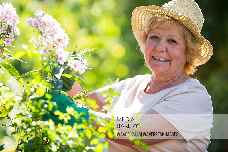 Portrait of senior woman examining flowers in garden on a sunny day