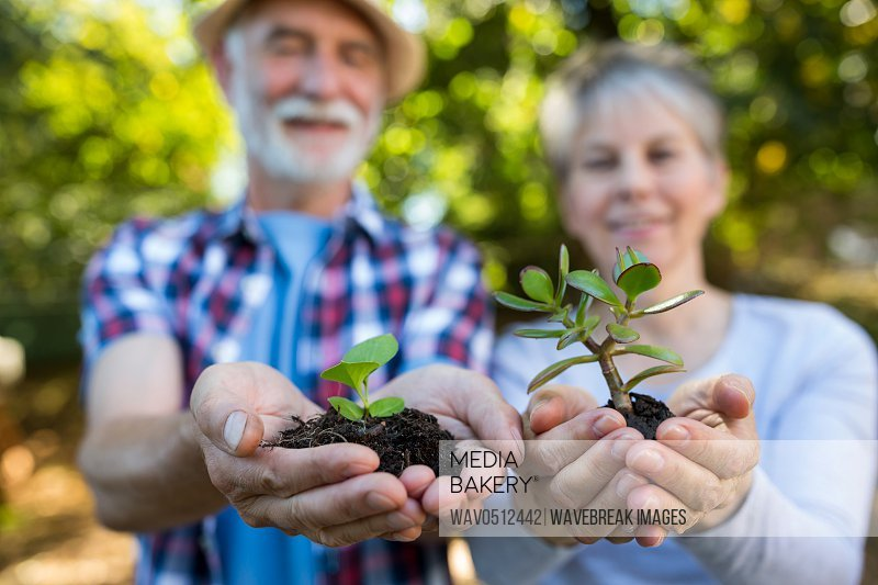 Portrait of couple holding crop in his hands in garden on a sunny day