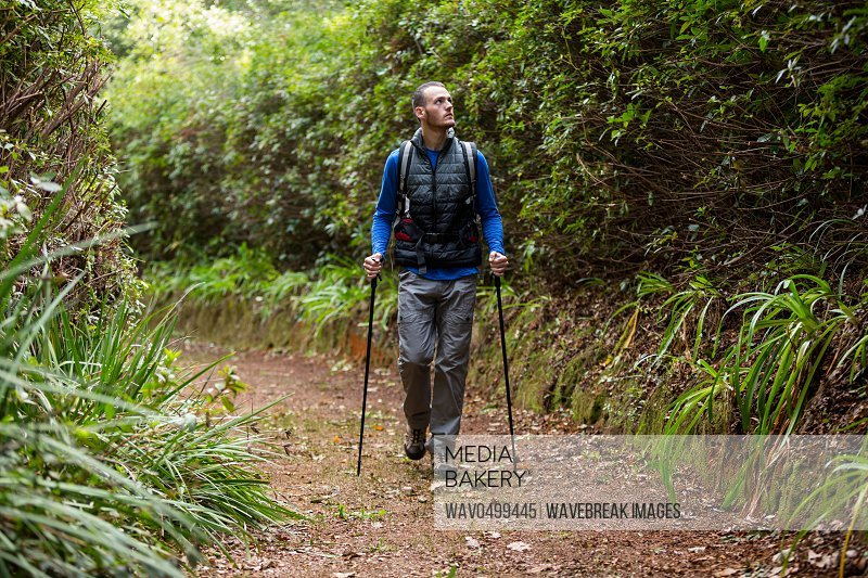 Male hiker walking with hiking pole in forest