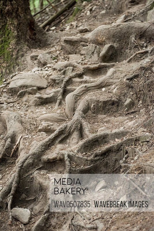 View of forest with sweeping roots covering rocks in countryside