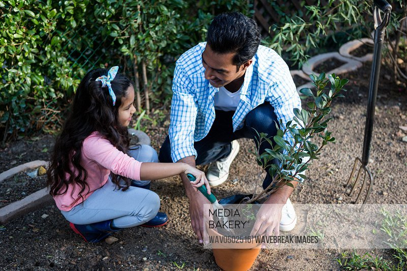Father and daughter potting plant in pot at backyard