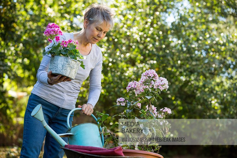 Senior woman gardening in garden on a sunny day