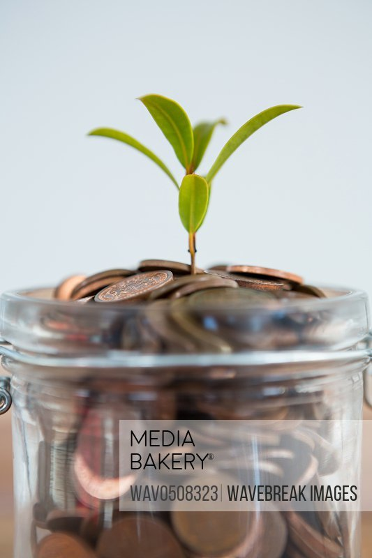 Plant growing out of coins jar against white background