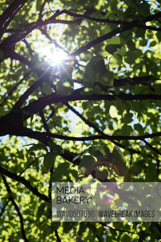 View of tree branch with a sunlight