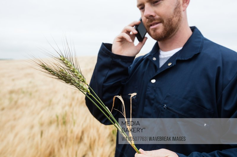 Farmer examining crops while talking on mobile phone in the field on a sunny day