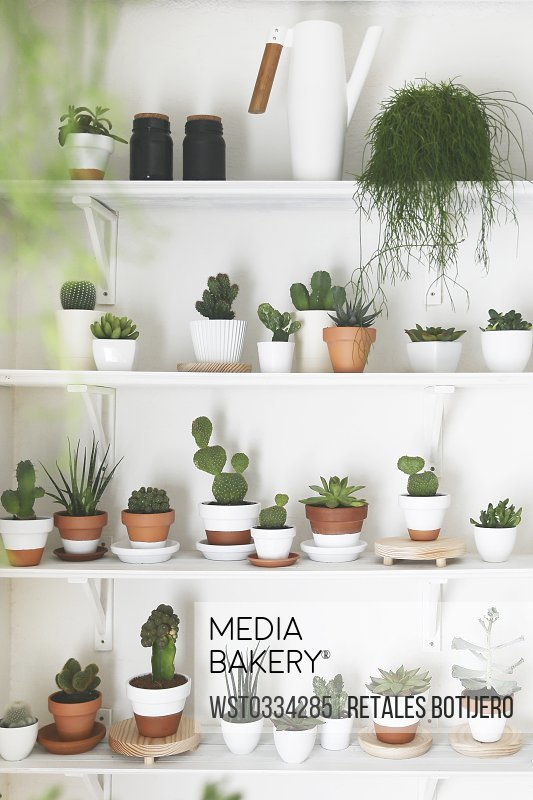 Collection of cacti and succulents