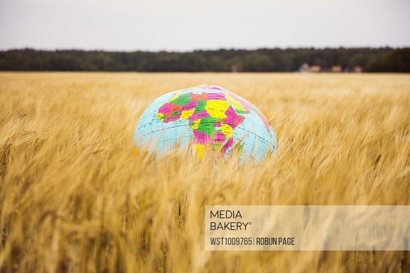 Globe in grain field