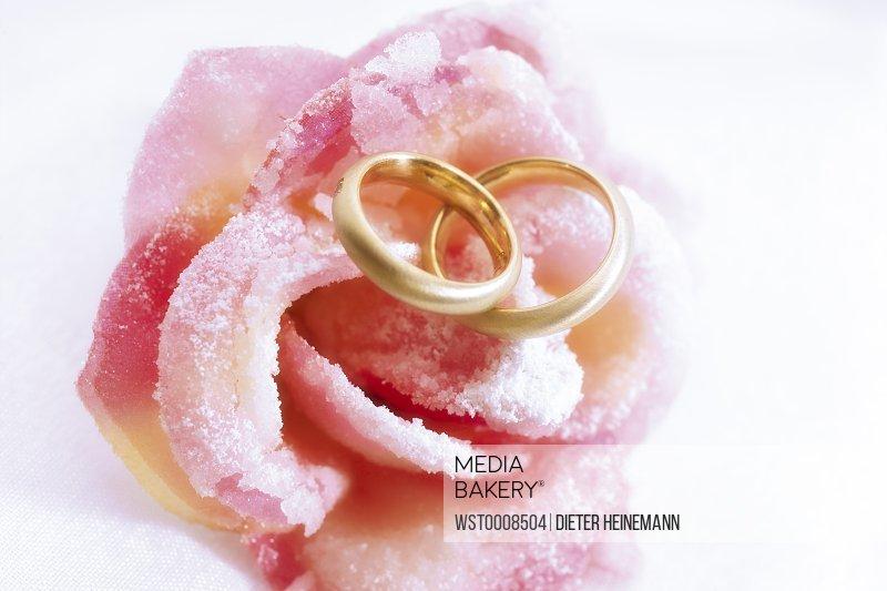 Wedding rings on pink rose