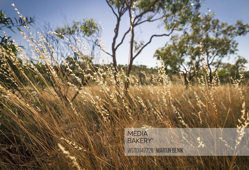 Australia, Grassland at Karijini National Park