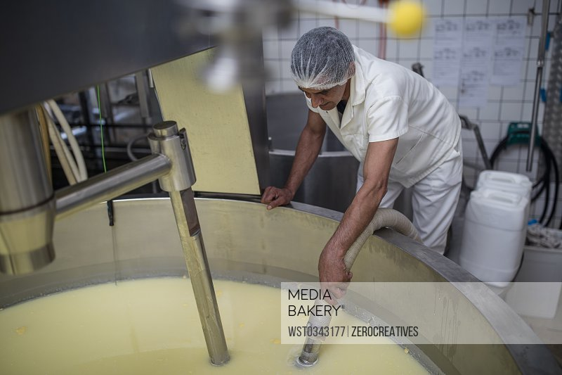 Cheese factory worker controlling curdling process