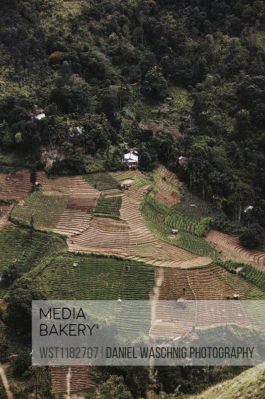 Sri Lanka, Uva Province, Ella, Terraced fields seen from Little Adams Peak