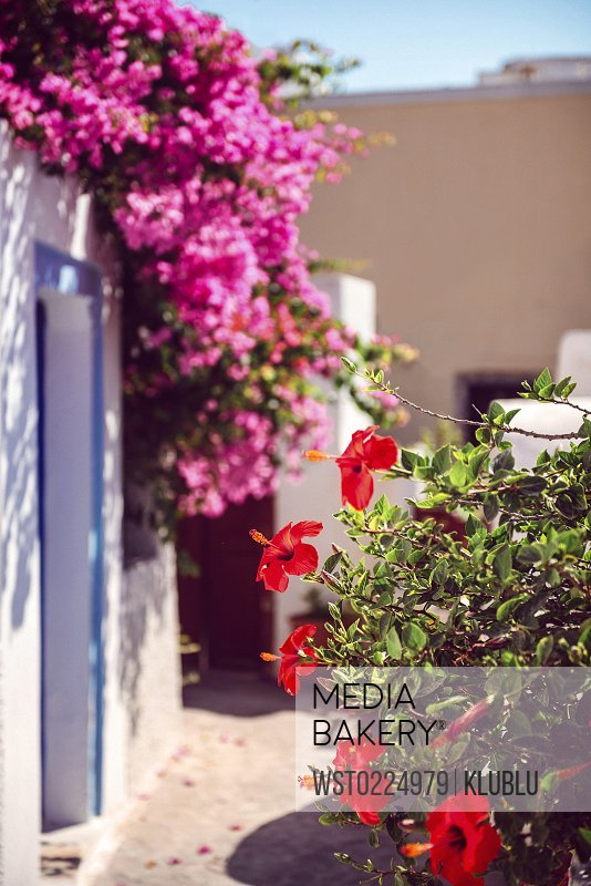 Mediabakery Photo By Westend 61 Greece Cyclades Santorini Oia