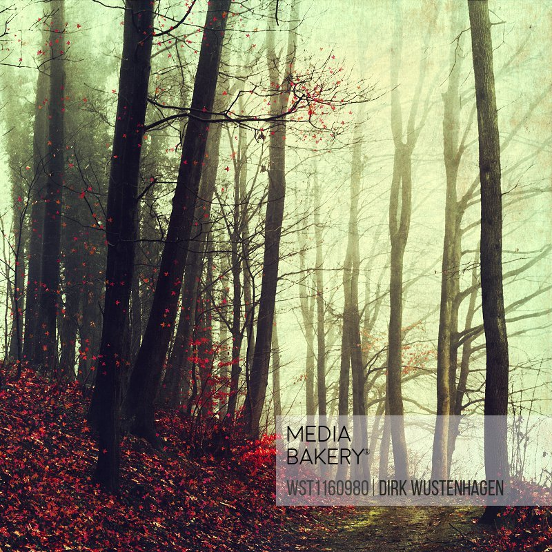 Germany, Wuppertal, scenic view of foggy forest