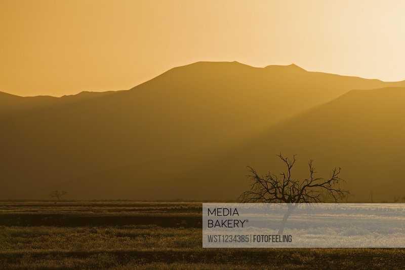 Africa, Namibia, Tsauchab River, Landscape at sunset