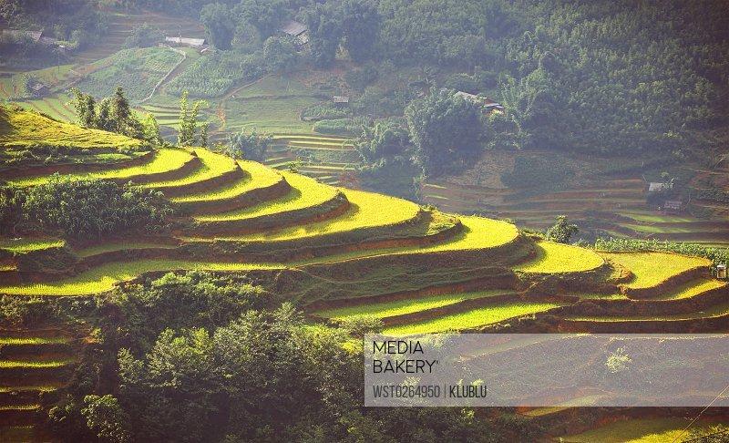 Vietnam, Sa Pa, terraced fields