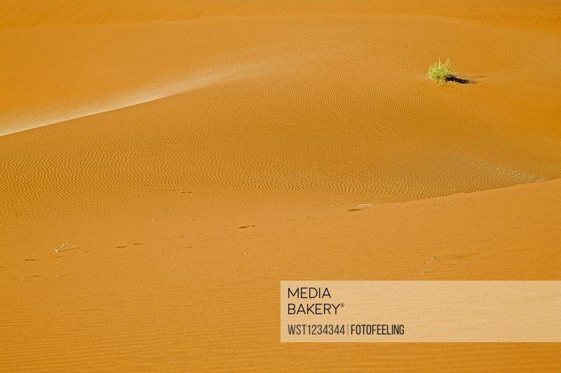 Africa, Namibia, Sossusvlei, Sand dunes, Desert plant